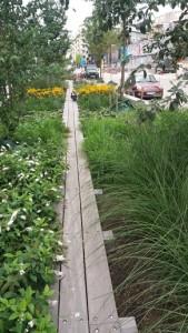 Grönstråk i bebyggelsen
